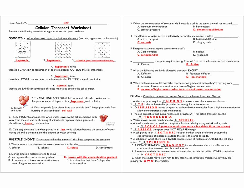 Cell Transport Worksheet Answers Best Of Cellular