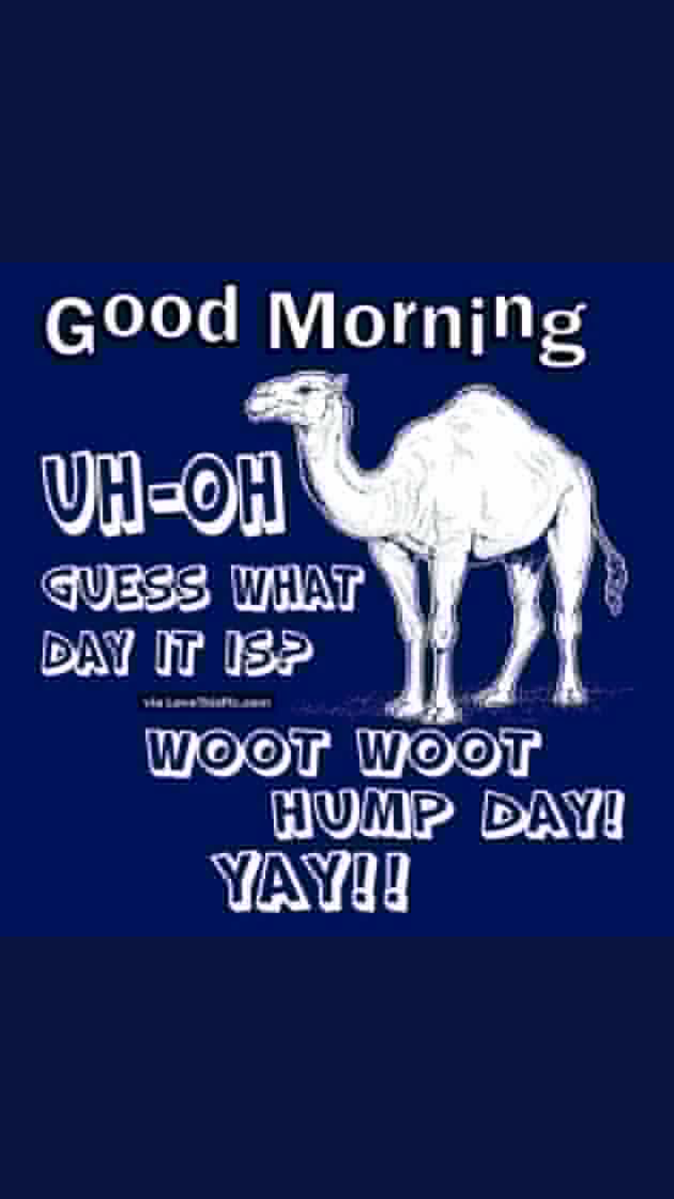 Happy Hump Day! Good morning funny, Happy wednesday