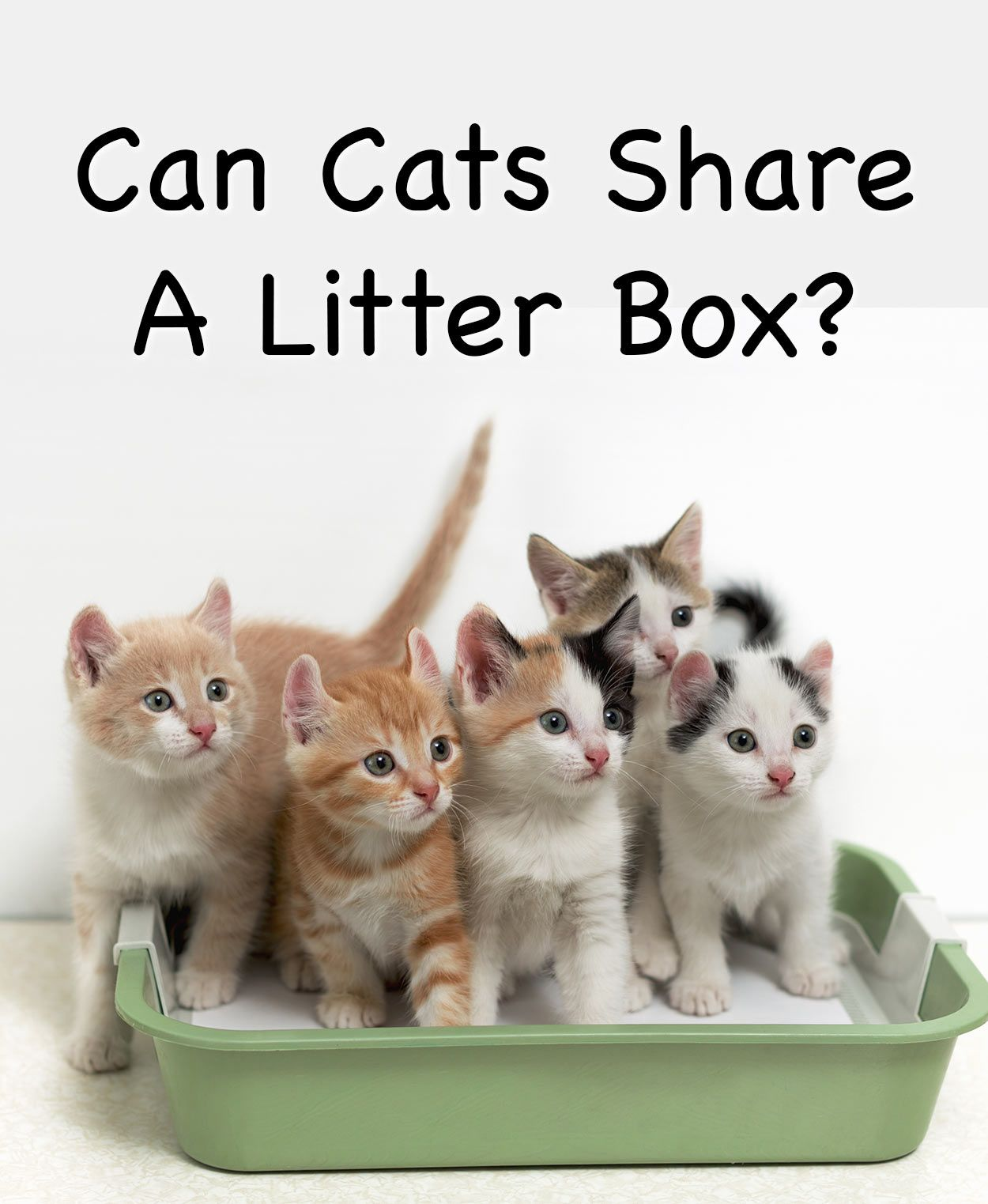 Can Cats Share A Litter Box Cat Product Reviews Best Cat Litter Cat Litter Cat Site
