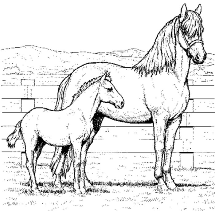 Ausmalbilder Pferde Gratis 3 Ausmalbilder Pferde Ausmalbilder Pferde Zum Ausdrucken Pferde Bilder Zum Ausmalen