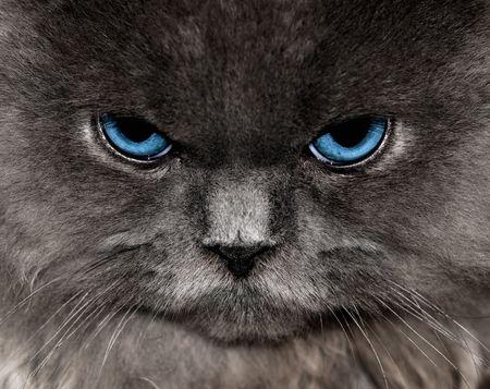 blue blue eyes- everyone loves this pin