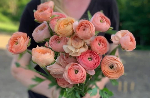 Ranunculus Elegance Salmone In 2020 Grow Gorgeous Flowers For Mom Spring Blooms