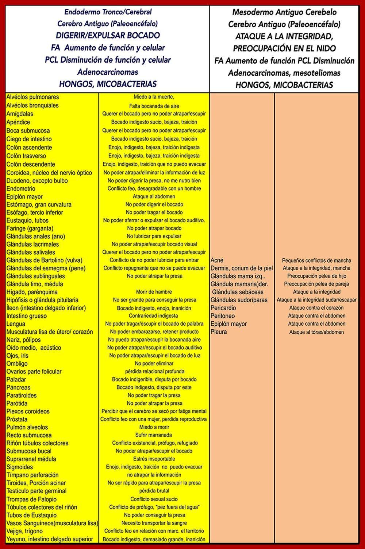 En este diagrama organizo los órganos alfabéticamente para ubicar ...