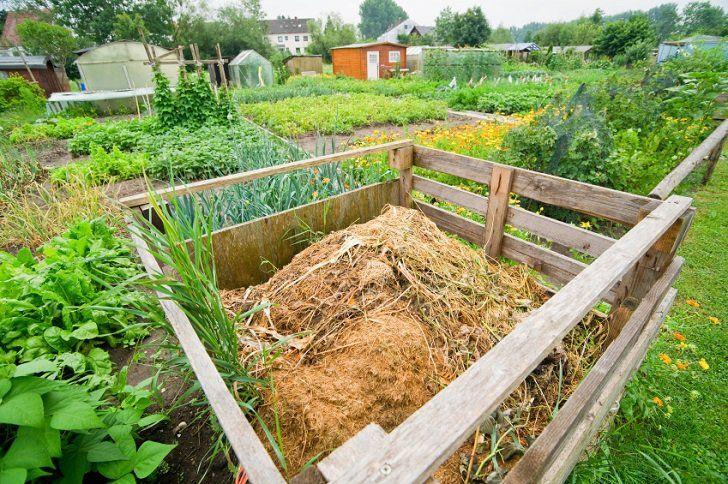cca8d0afbdc89a37cc63a0a2b41e5f7e - Is Sheep Manure Good For Vegetable Gardens