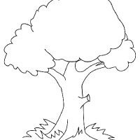 Comment dessiner un arbre pinteres - Dessin arbre simple ...