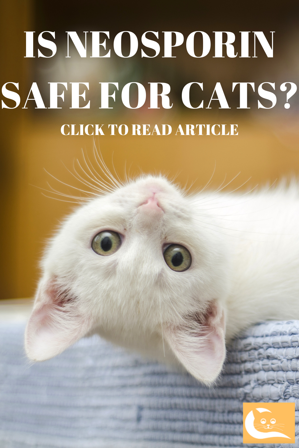 What You Need To Know About Neosporin Cats Cat Wounds Neosporin