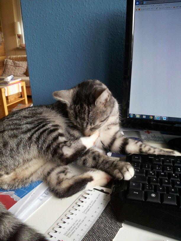 Katzenwäsche am Computer. Er ist mir eine große Hilfe. ...