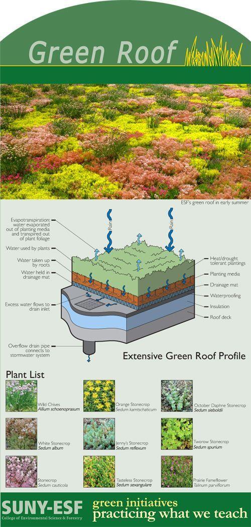 Green Roof Technics And Plants Dachbegrunung Technik Und Pflanzen Toit Vegetalise Architecture Ecologique Toit Vert