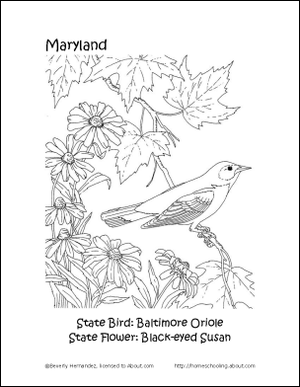 Maryland Printables State Bird And Flower Coloring Page