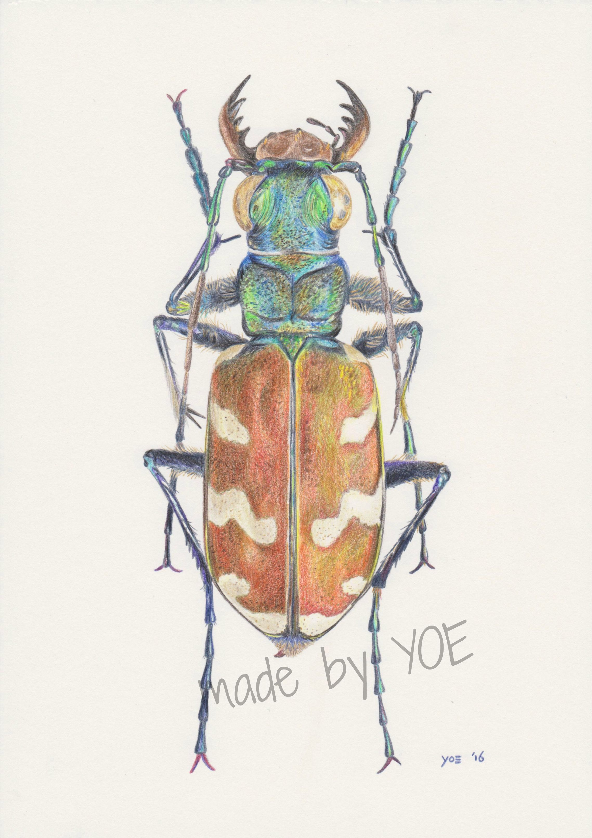 Insect in coloured pencil color pen flowers insects leaves
