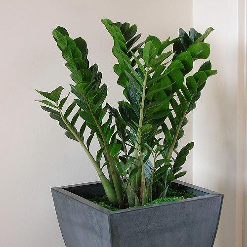 неприхотливые комнатные растения | Растения, Комнатные ...