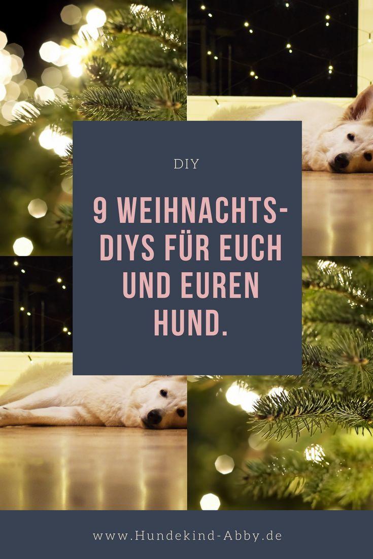 Unsere Lieblingsweihnachts Diys Hund Weihnachten Hund Geschenke Hunde