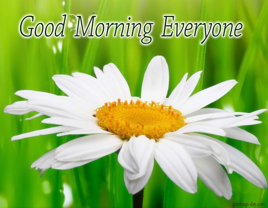 Good Morning - Daily Cards, GIFs and Greetings. #GOODMORNING http ...
