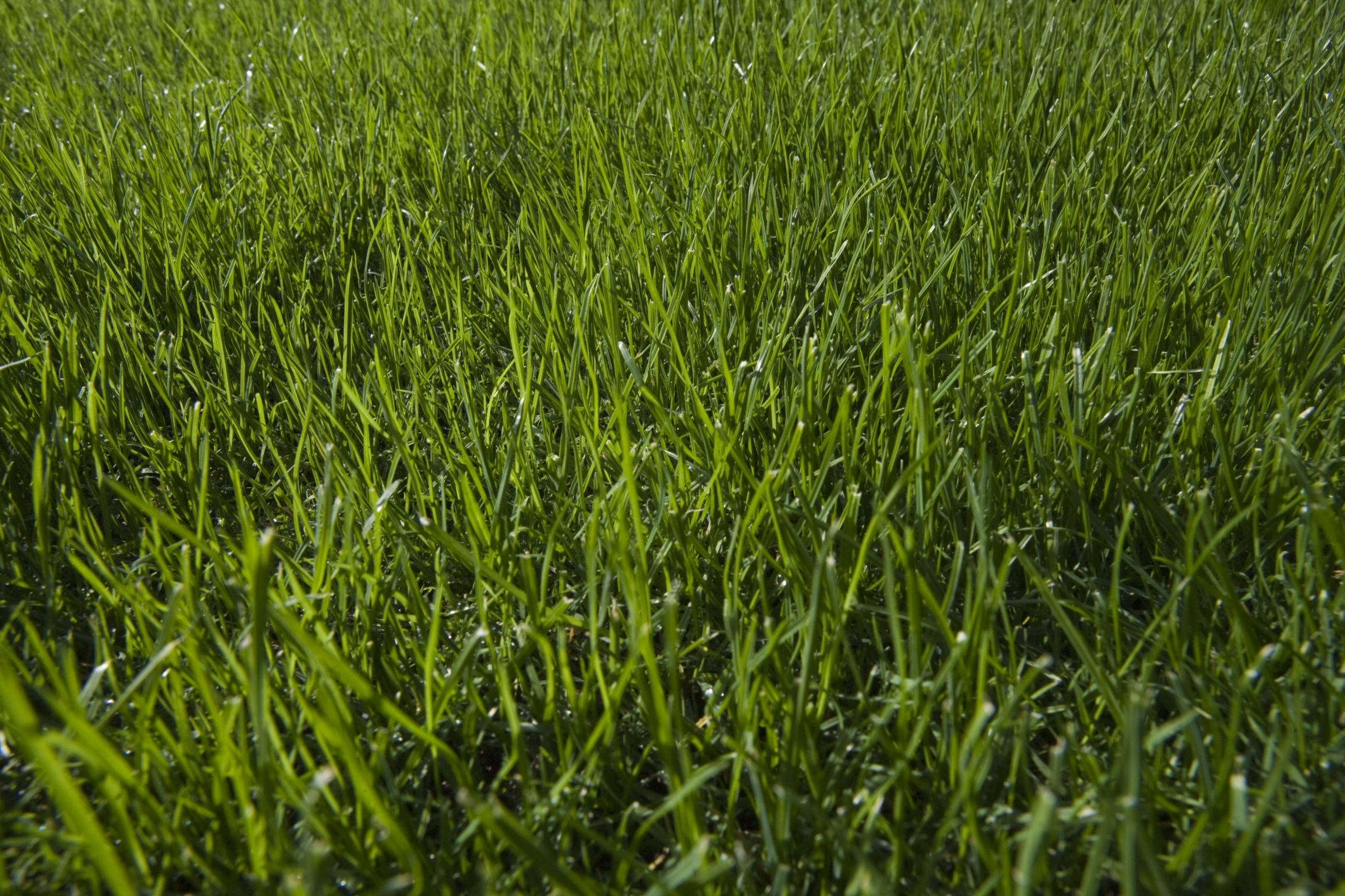 How much topsoil is needed to grow good grass top soil