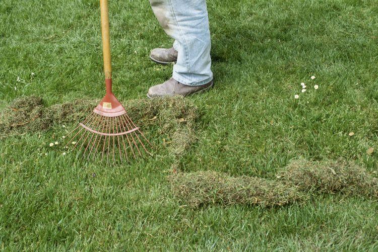 Neuestedekoration Com Moos Im Rasen Moos Im Rasen Entfernen Rasenpflege Fruhling