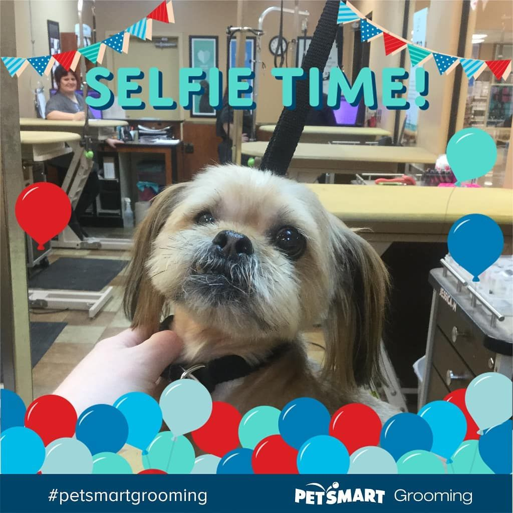 Watch The Best Youtube Videos Online Petsmart Petsmartgrooming Colerainpetsmart Fortheloveofpets Trustedparter Petsmart Grooming Dog Grooming Spa Day