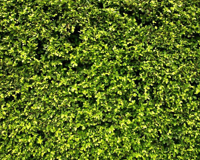 Vertical Garden Texture Buscar Con Google Material Garden