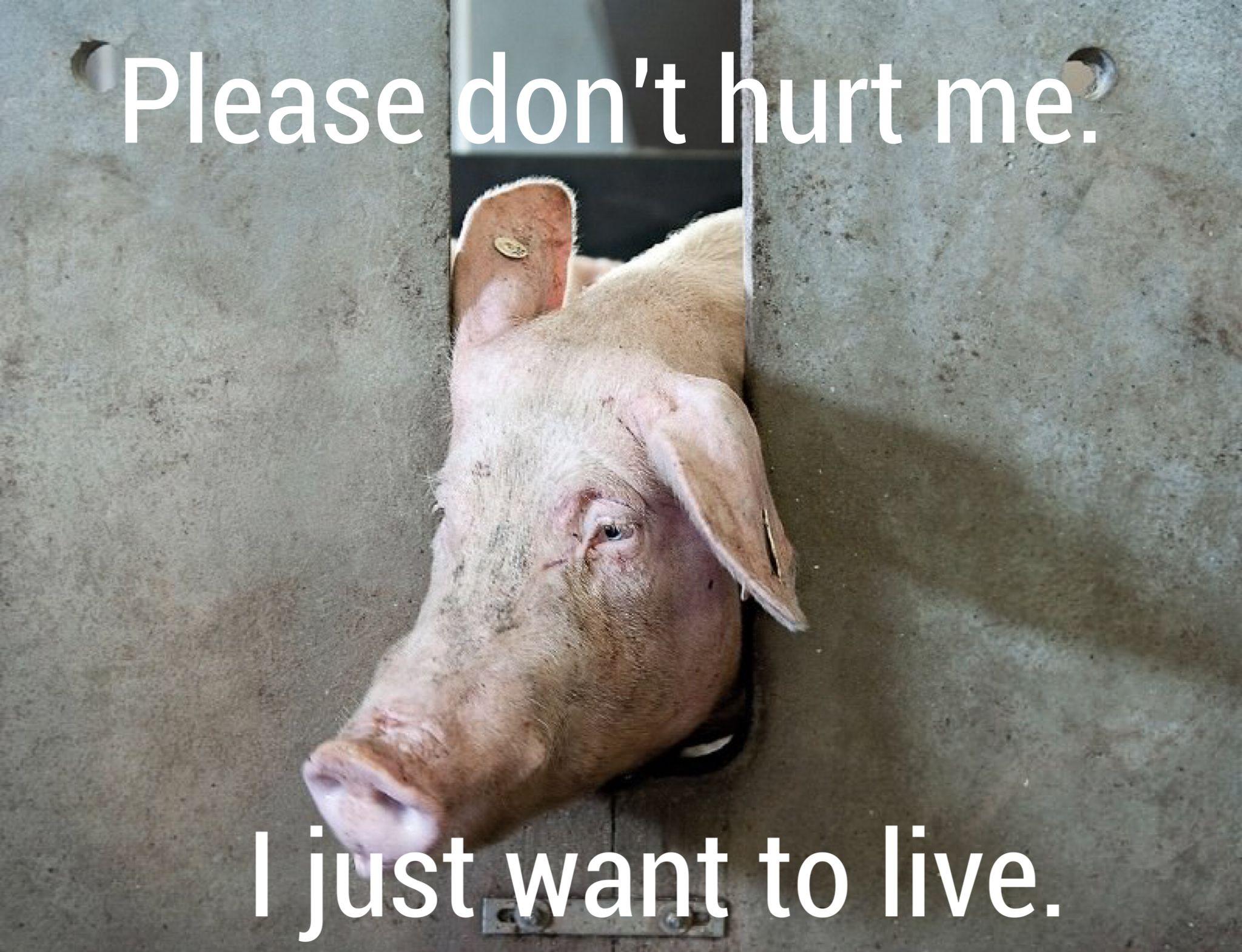 Animal Cruelty Quotes Why Finance Cruelty Vegan Crueltyfree  Veganism  Animal