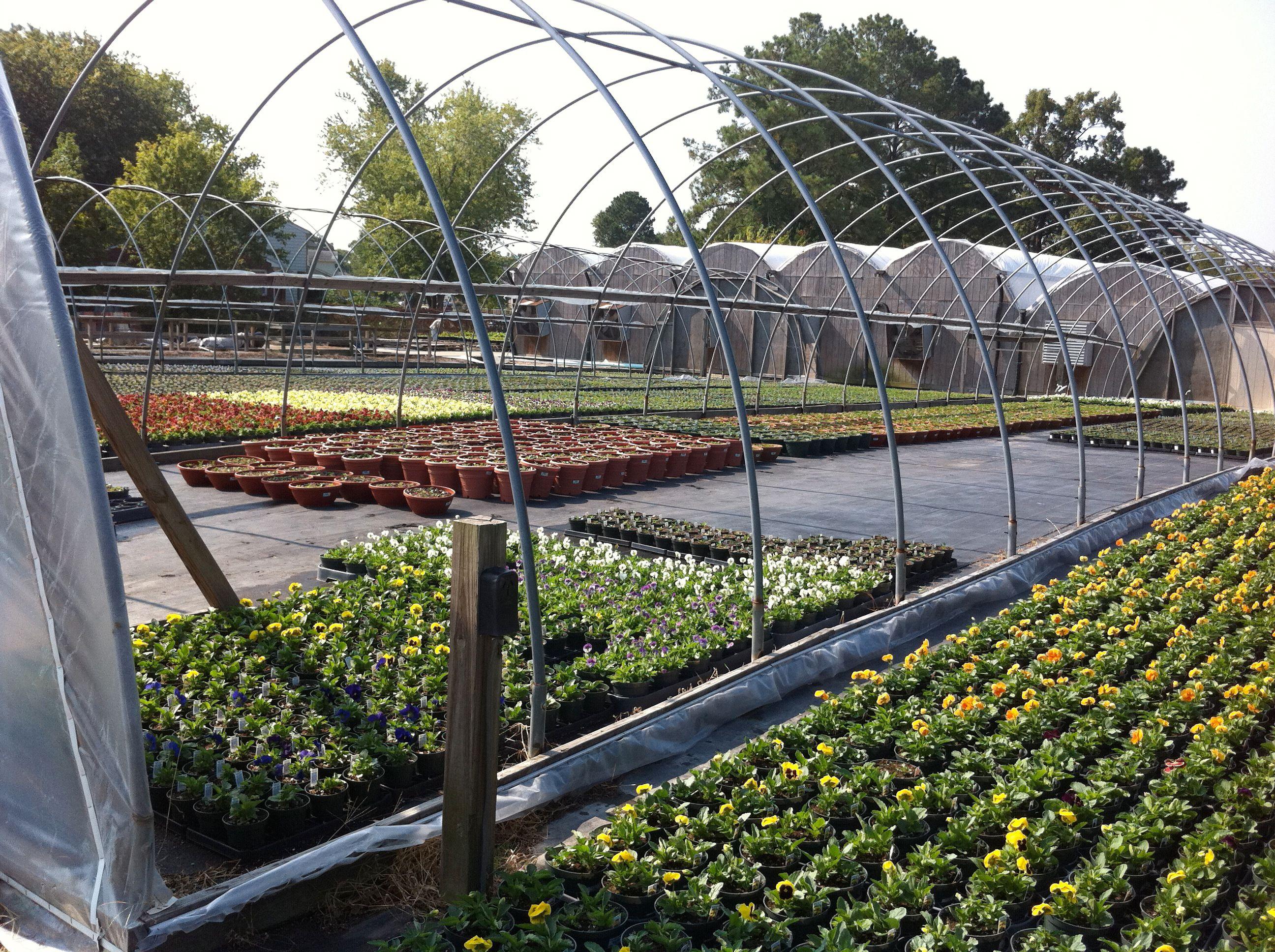 McDonald Garden Center Growing Facility Hampton