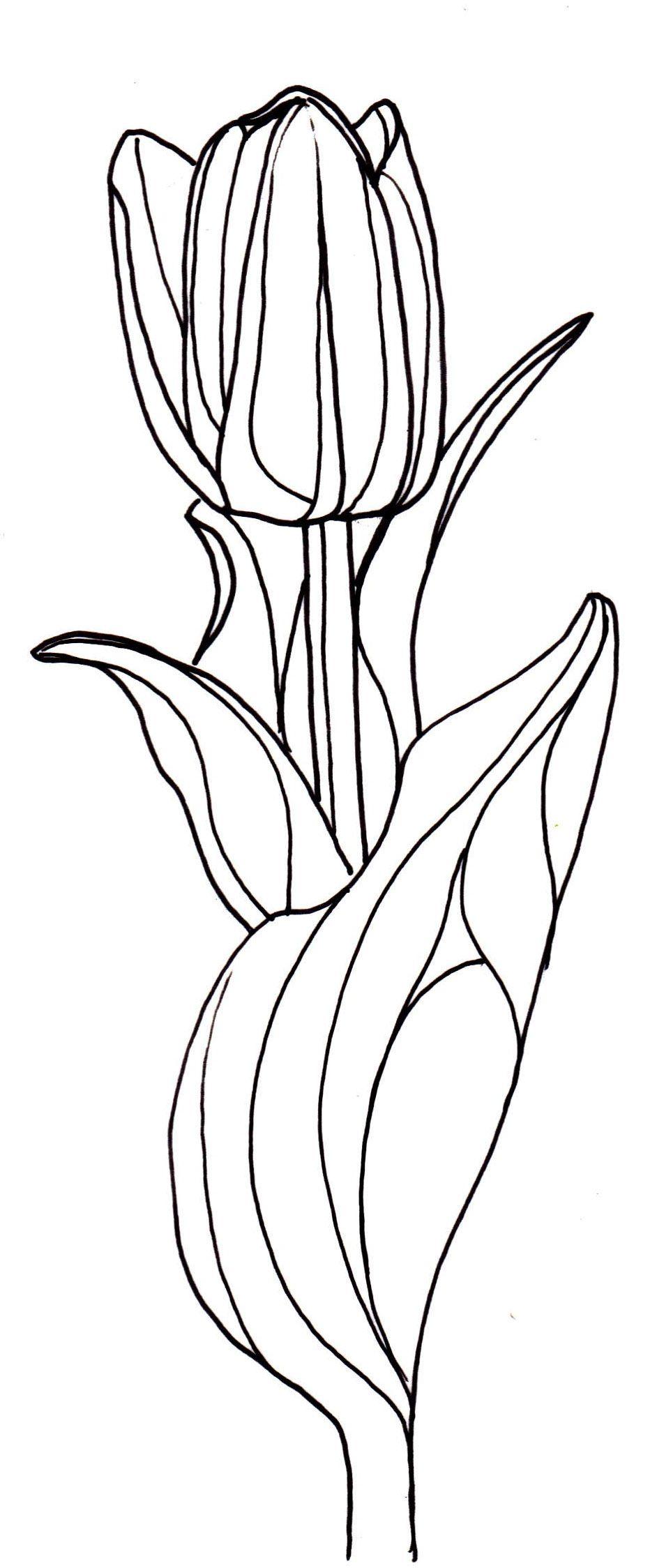 Line Drawing Of Tulip Flower : Line drawing flowers tulip drawings pinterest