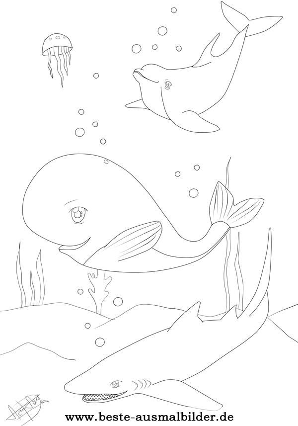 ausmalbilder fische hai delfin wal  vorlagen