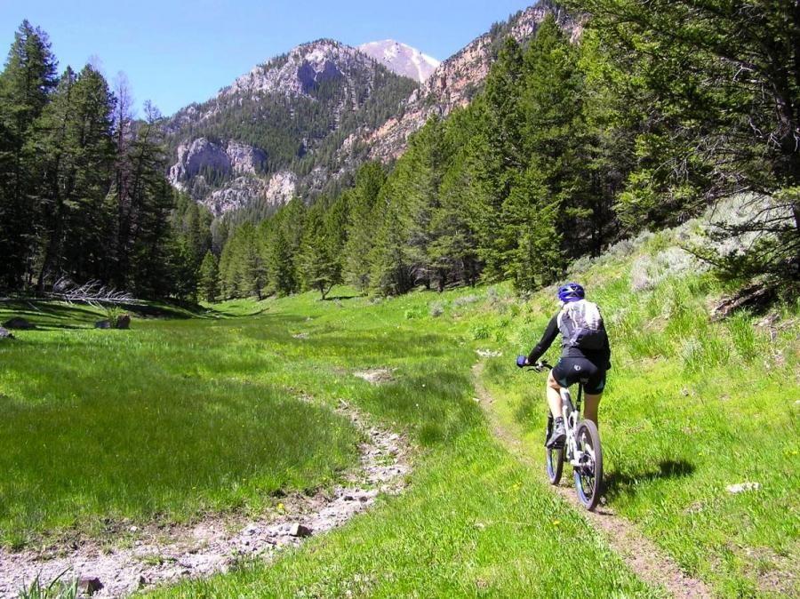 Tea Creek Mountain Trail photo || SINGLETRACKS.COM