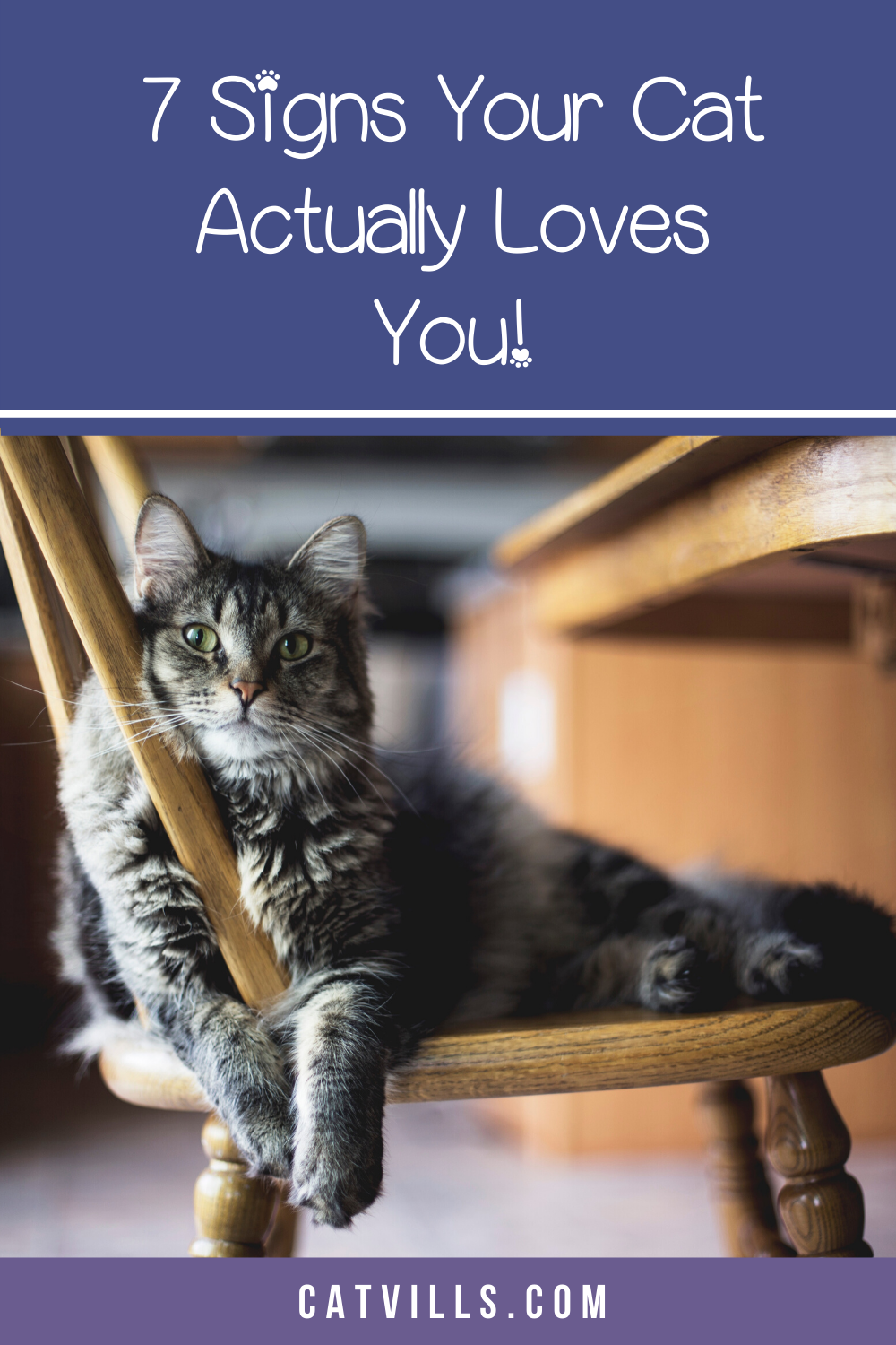 7 Unmistakable Signs Your Cat Loves You Catvills In 2020 Cat Love Cats Cute Cats And Kittens