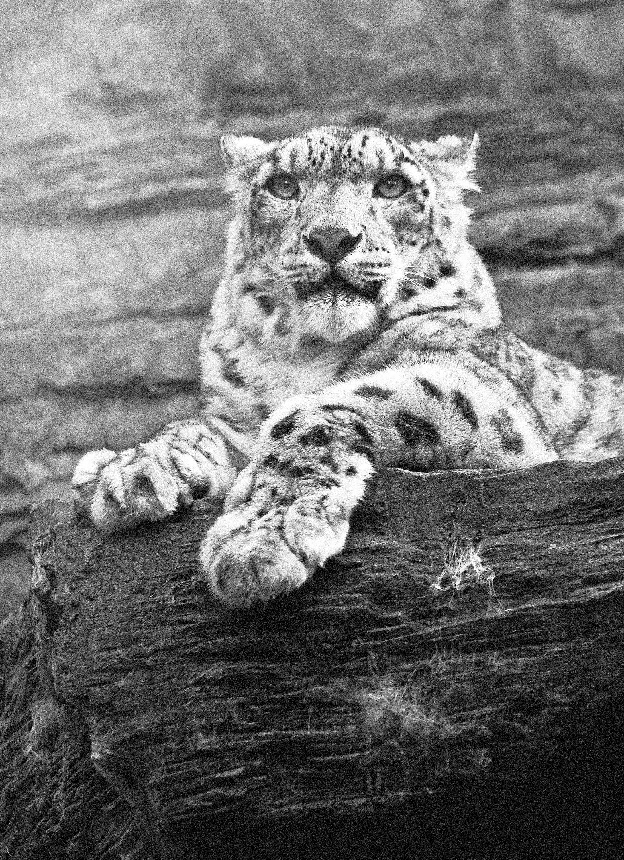 £119 00 buy a beautiful black and white print of the magnificent and noble
