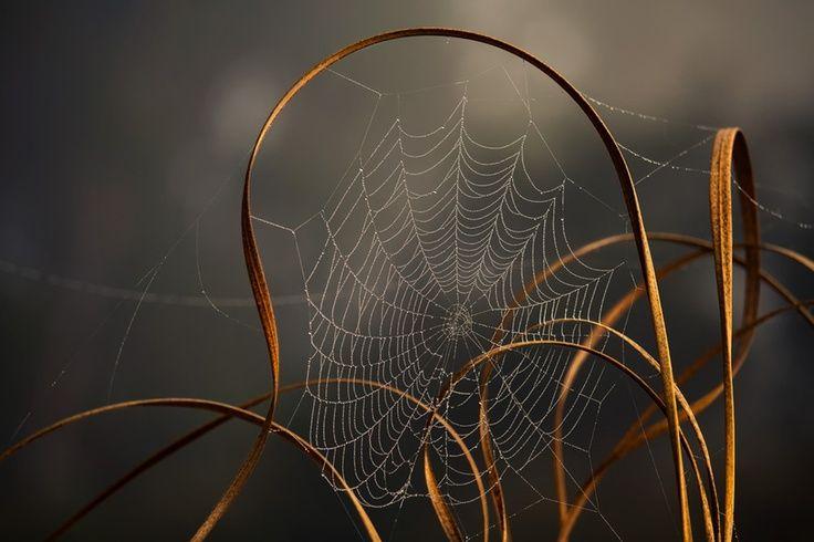 autumn toiles d 39 araign es pinterest araign es toiles et toile de ma tre. Black Bedroom Furniture Sets. Home Design Ideas