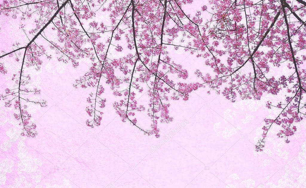 28 Gambar Background Bunga Pink Background Pink Bunga Sakura 1024x1024 Wallpaper Download Pink Rose Flower Backgro Gambar Bunga Wallpaper Bunga Bunga Biru