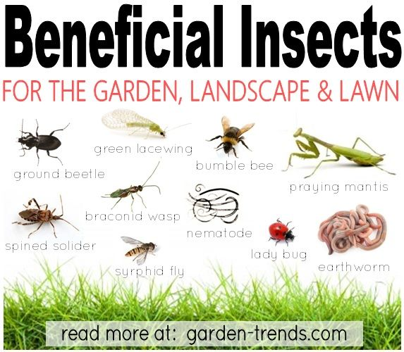 Beau These Are The Garden Bugs You Want In Your Garden