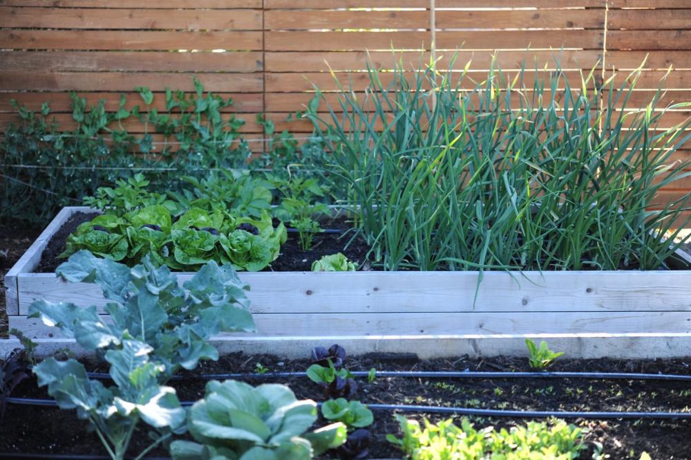 Pin On Garden Prep