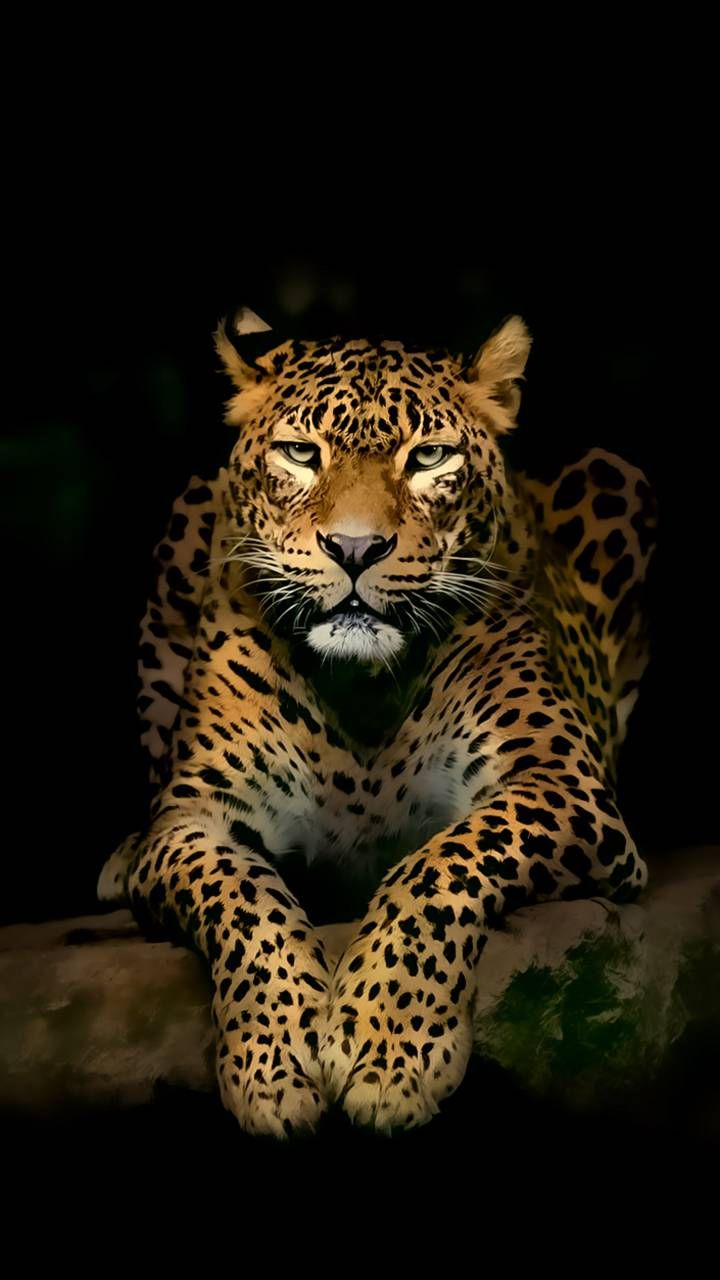 Download Leopard Wallpaper By P3tr1t 5b Free On Zedge Now Browse Millions Of Popular 1080p Wallpapers An Jaguar Animal Wild Animal Wallpaper Cute Animals