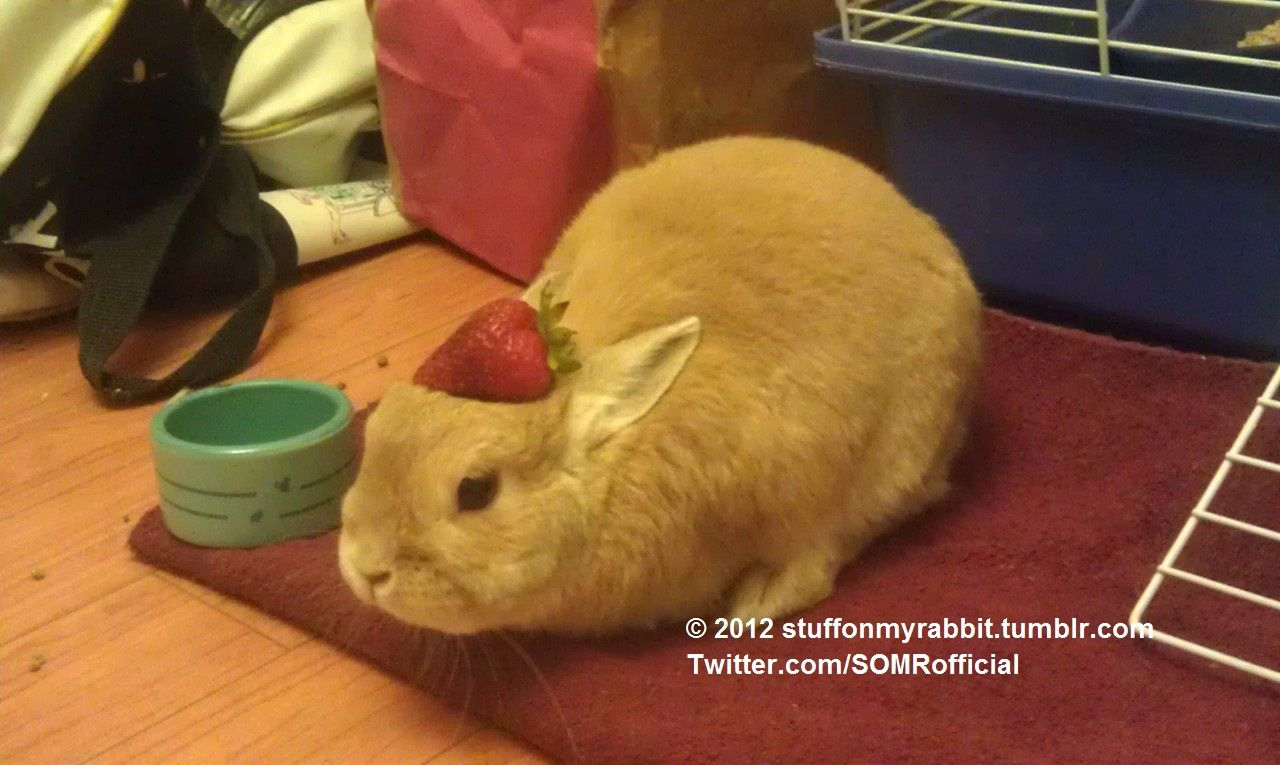 Stuff on My Rabbit, Strawberry http://sulia.com/my_thoughts/6aacc6a0-1b72-4537-a464-a8fe616f1c7c/?pinner=undefined