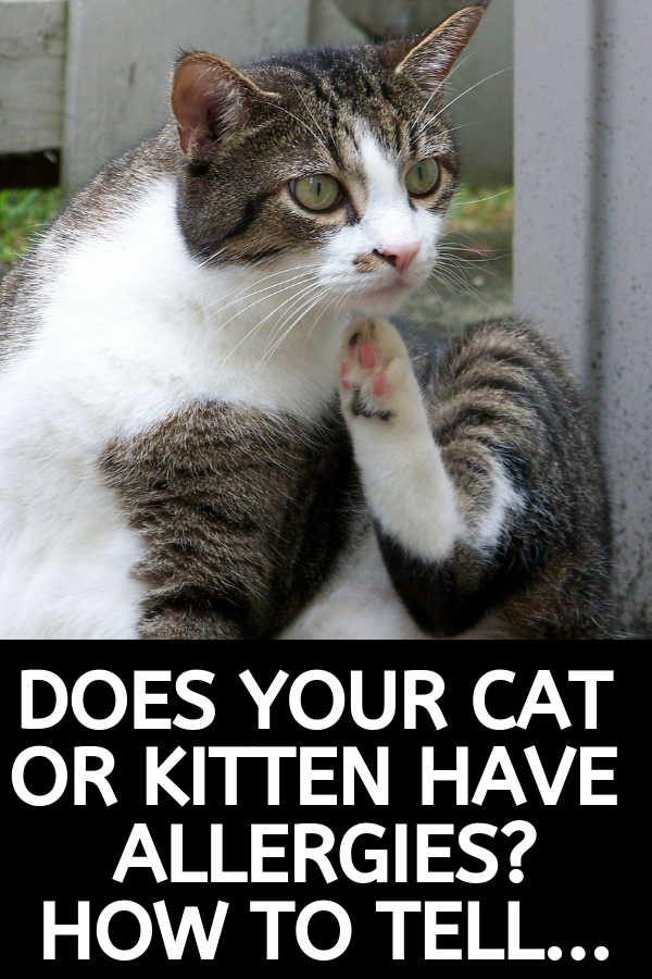 Does Your Cat Have an Allergy? Cat allergies, Cat care