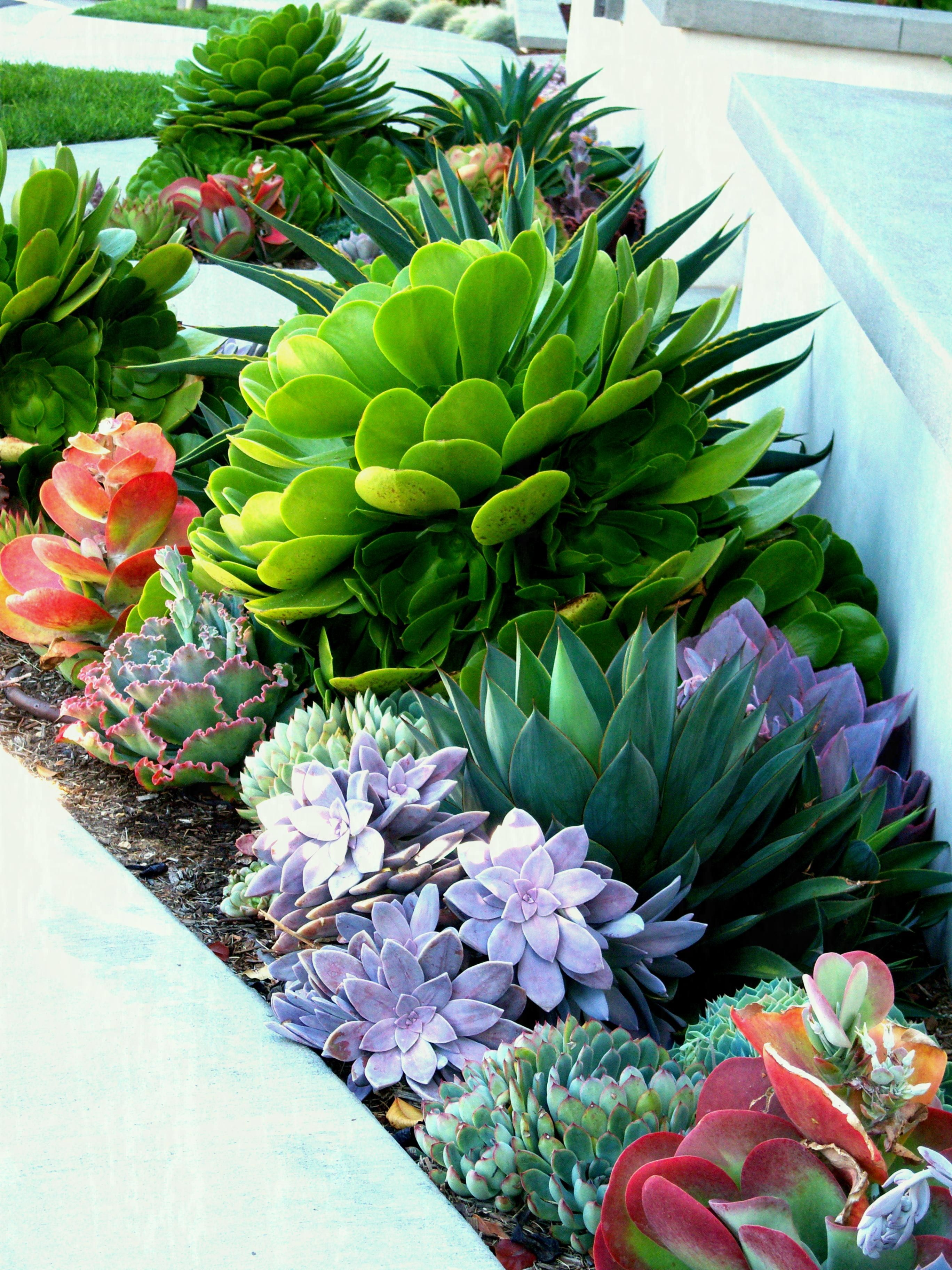 Succulent Landscaping Grassless Front Yard Low Maintenance Find Your Best  Style Of For Backyard Cactus Garden Landscape Ideas House Beadboard Drought  ...
