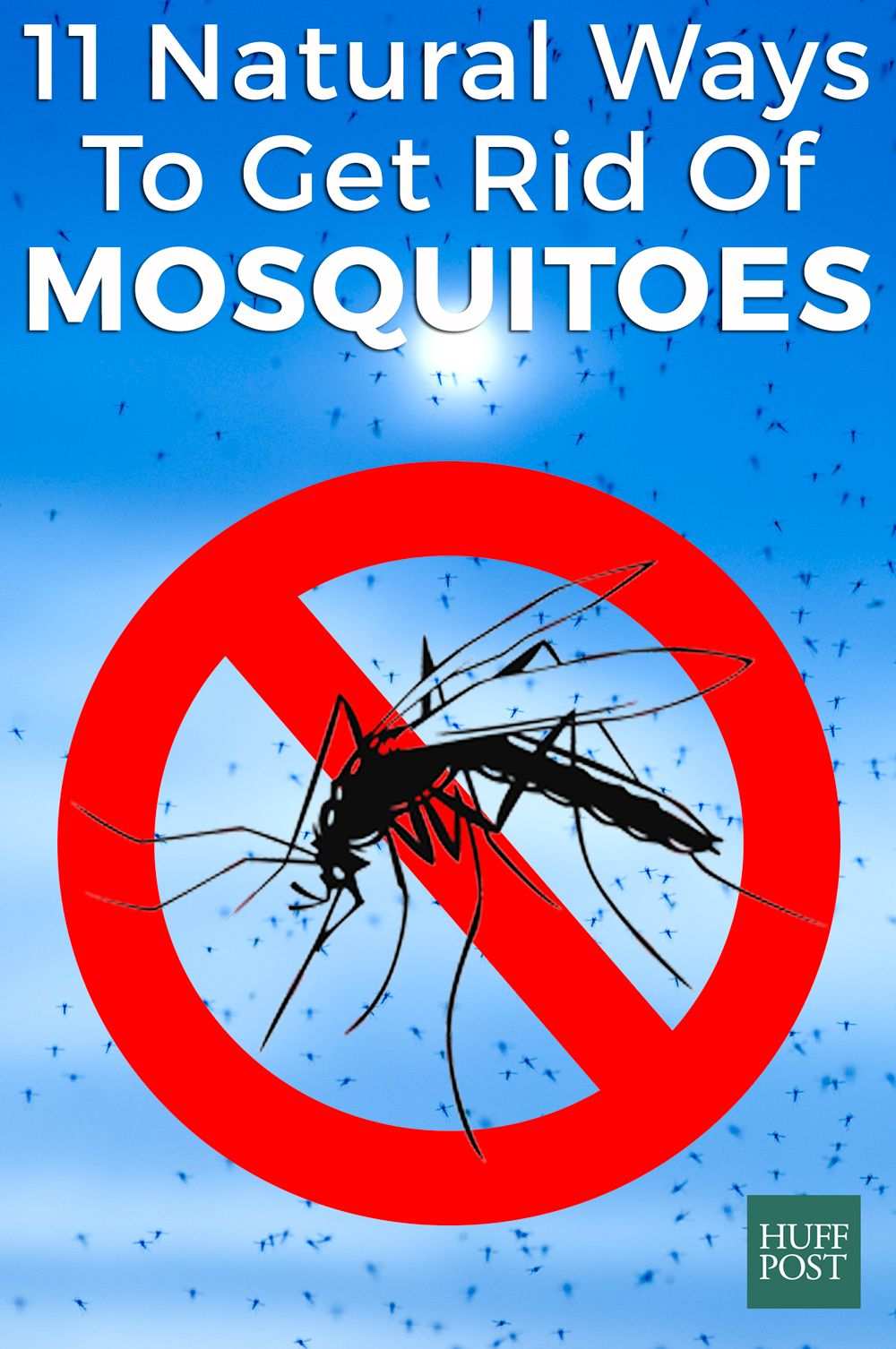Get Rid Of Mosquitoes This Summer