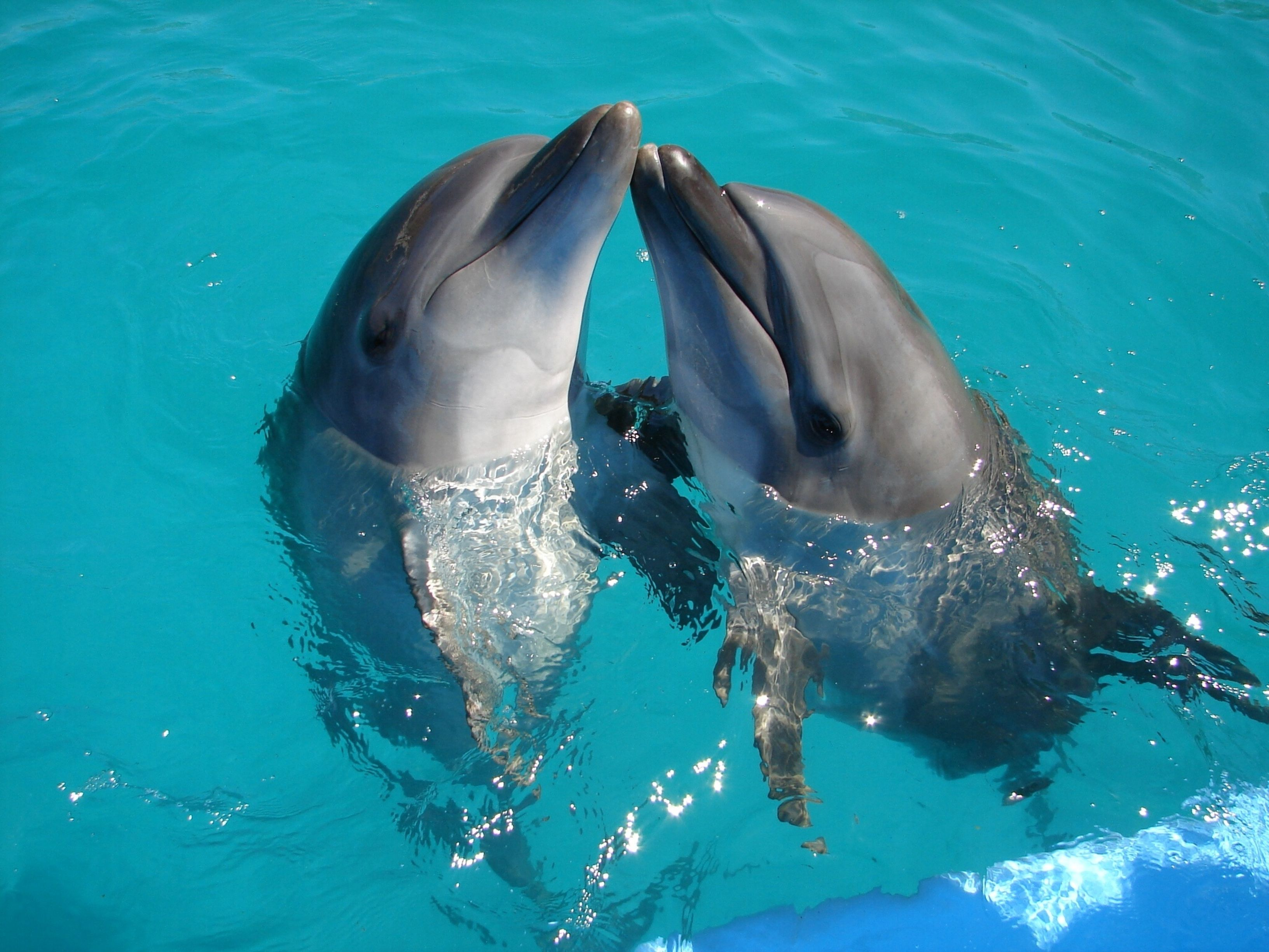 Oh My Kissing Dolphins Dolphins Animals Dolphin Photos