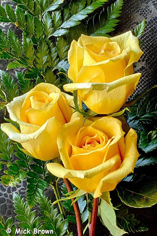 I see my Mom in yellow roses because they are her favorite