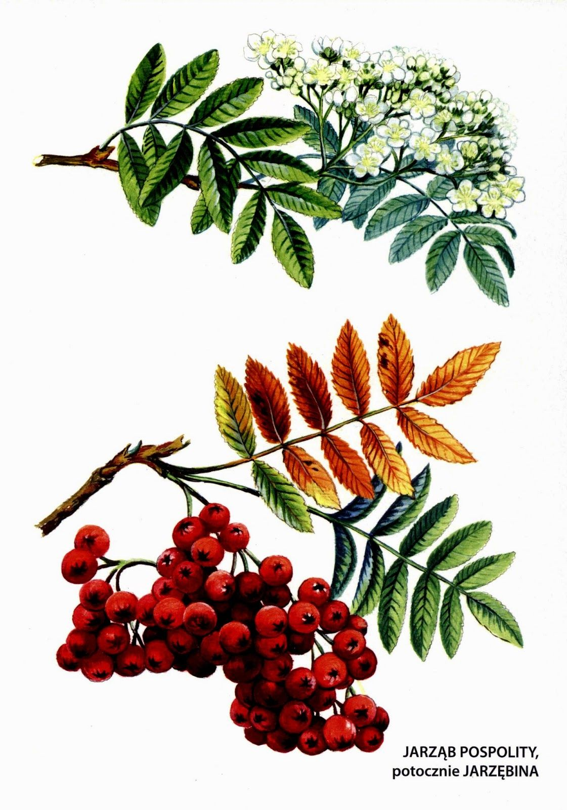 Jesienne Pomoce Dydaktyczne Drzewa Ilustracje Srodowisko