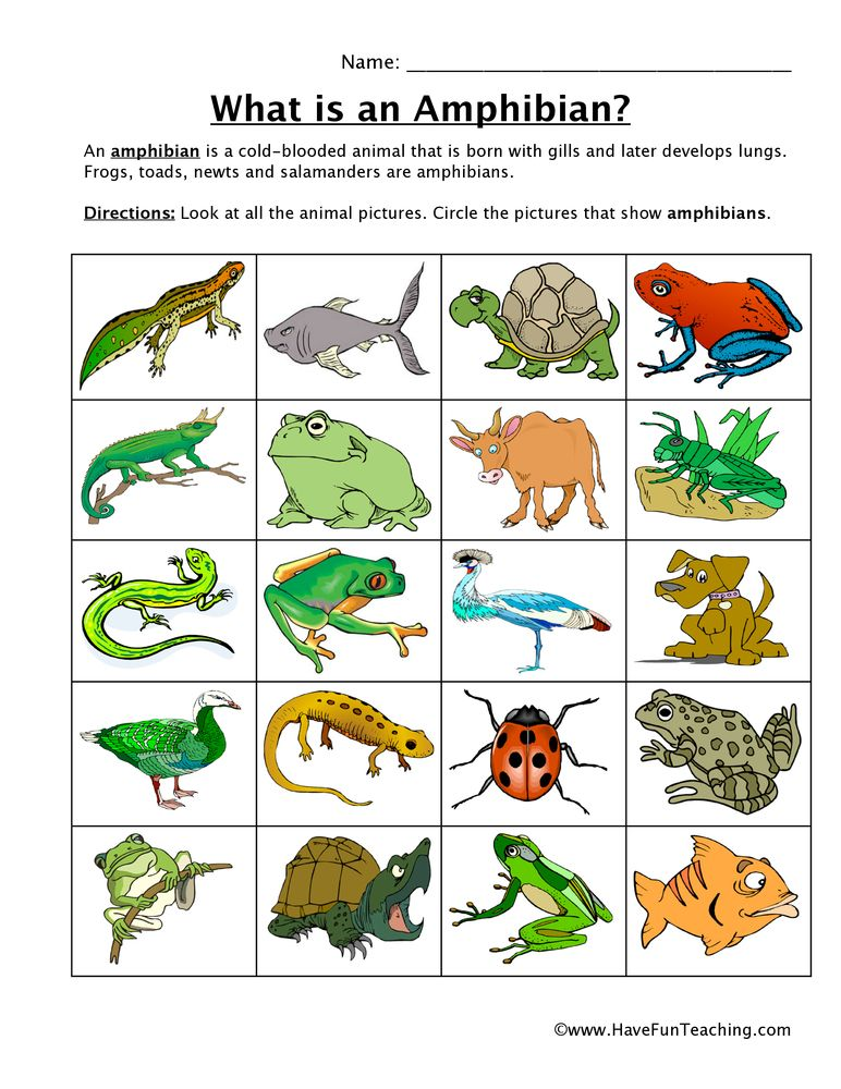 amphibian-classifying-worksheet | animals | Pinterest ...