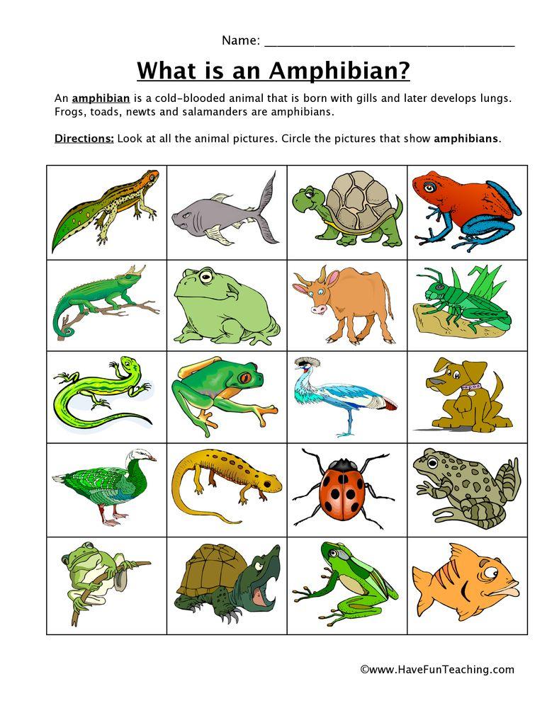 amphibian-classifying-worksheet | animals | Pinterest ...