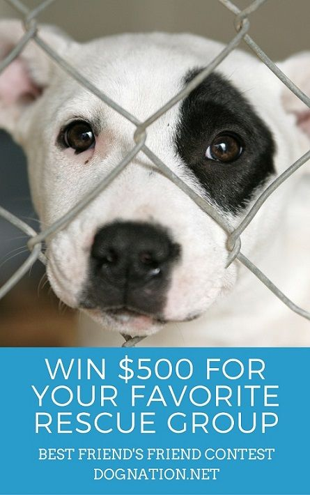 Let S Help Shelter Dogs Significantly Shelter Dogs Cute Animals Dog Pictures