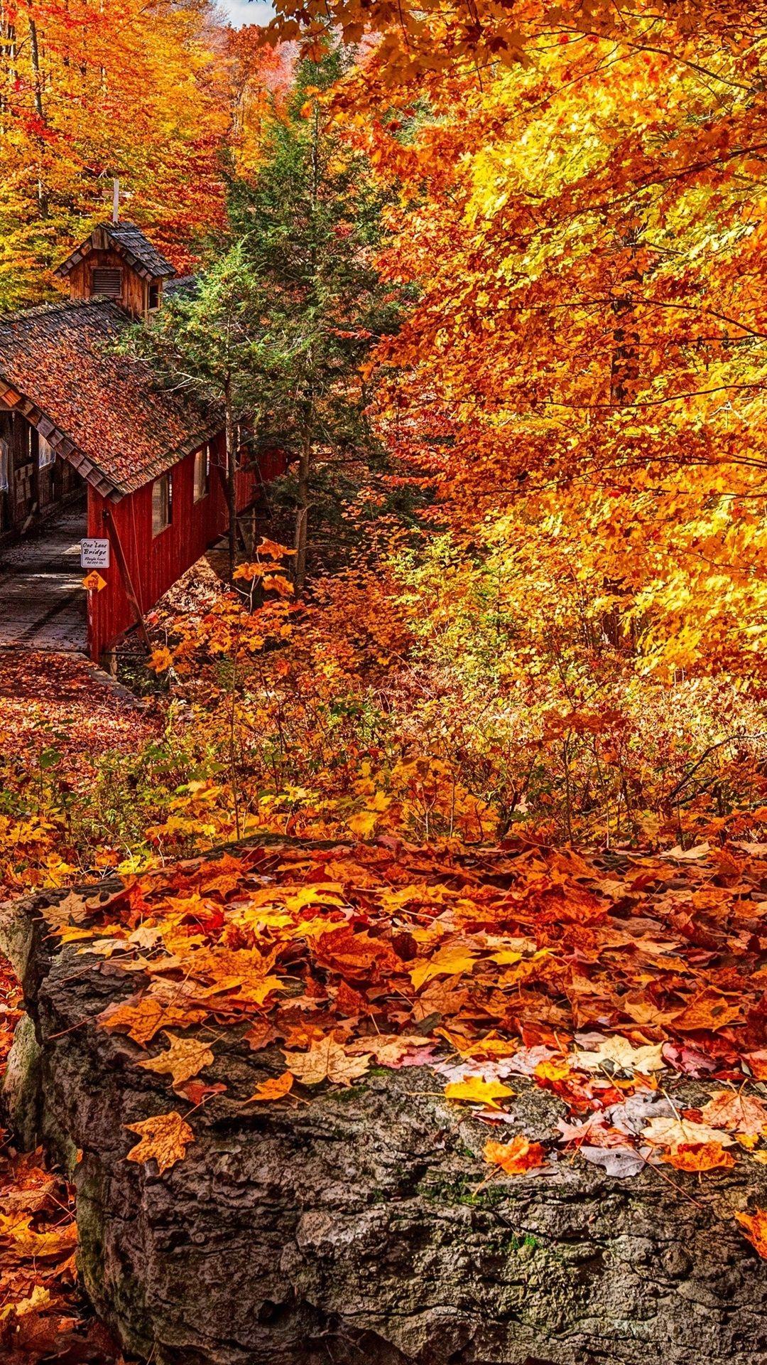 最高の壁紙 人気の壁紙 Iphone 壁紙 秋 美しい風景 ランダム
