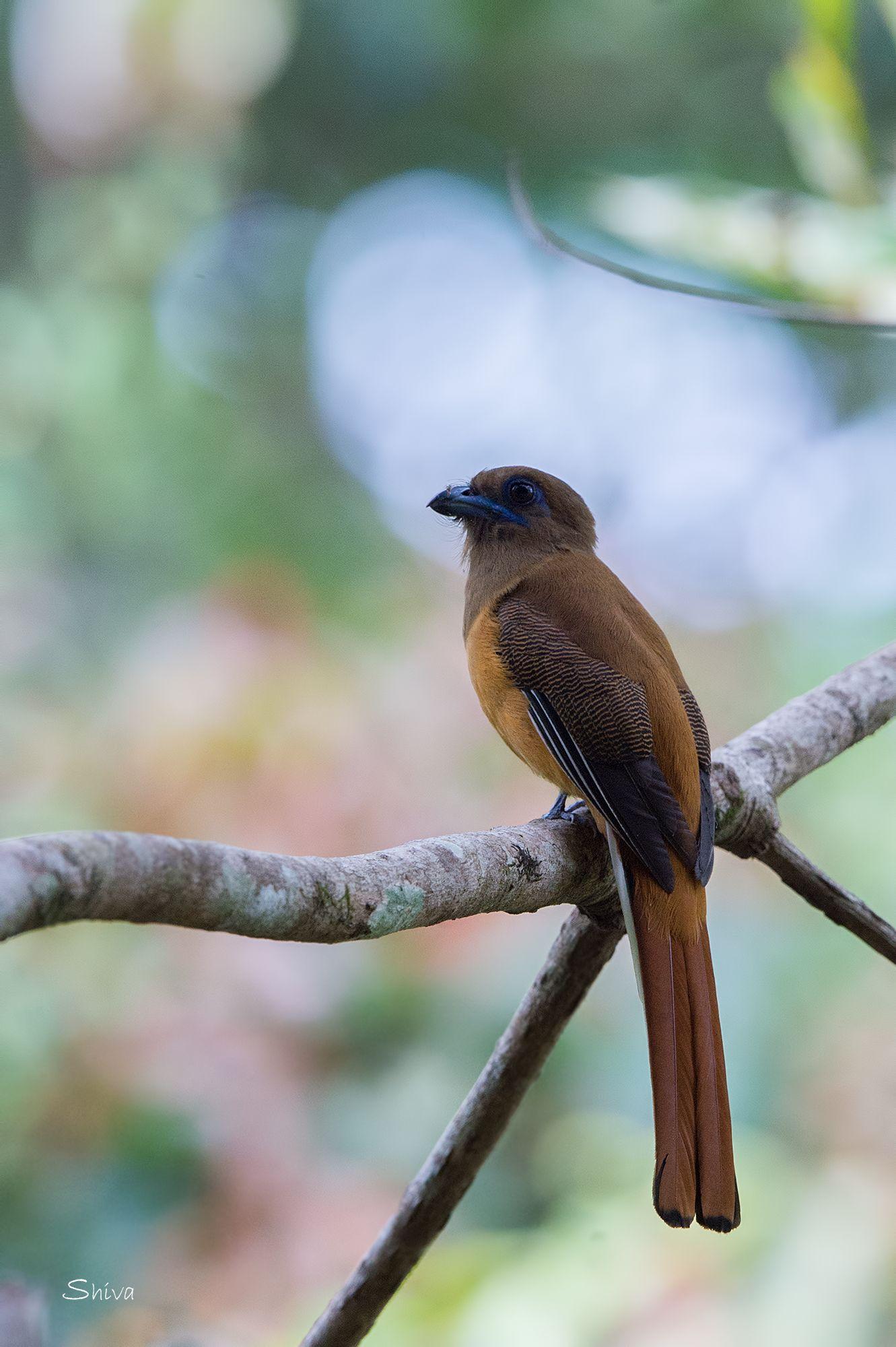 GBBC | Great Backyard Bird Count | Gbbc, Great backyard ...