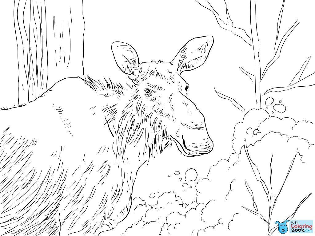 Eastern Moose Coloring Pages Deer Coloring Pages Coloring Pages Cartoon Coloring Pages