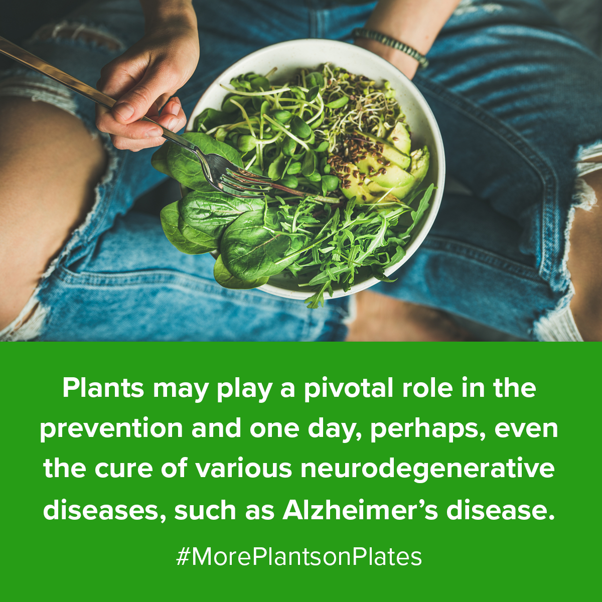 plant-based diet and demenita plant-based diet and dementia