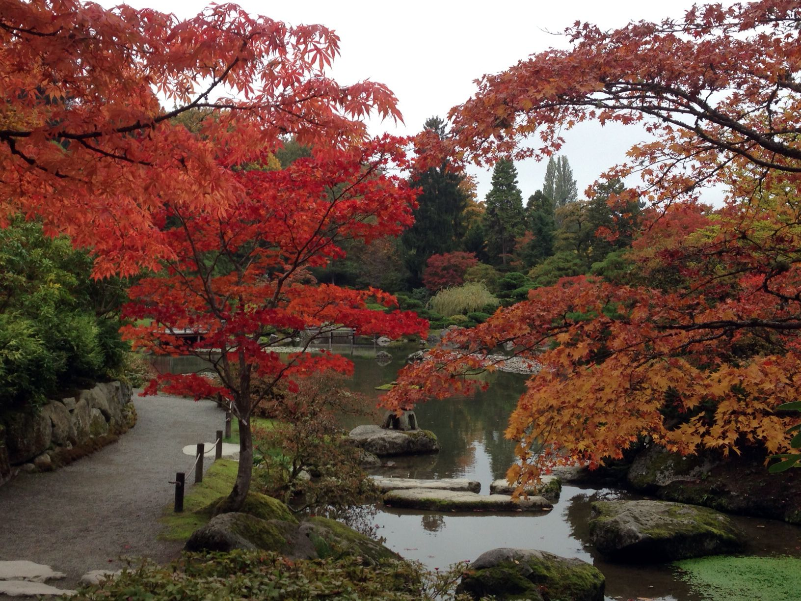 Seattle's Japanese garden in autumn color Seattle