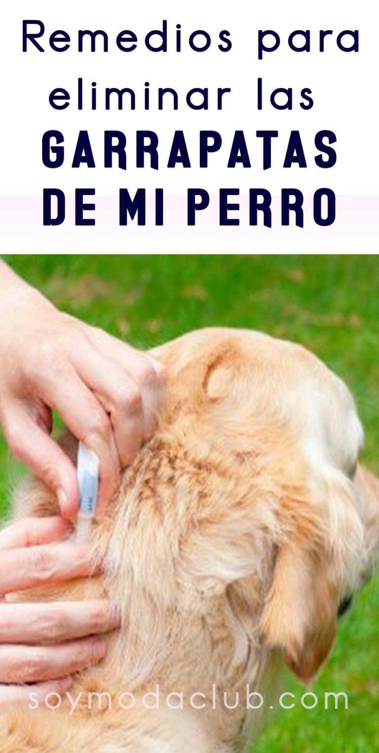 Como Acabar Con Las Pulgas En El Jardin Remedios Caseros Para Eliminar Las Garrapatas De Mi Perro