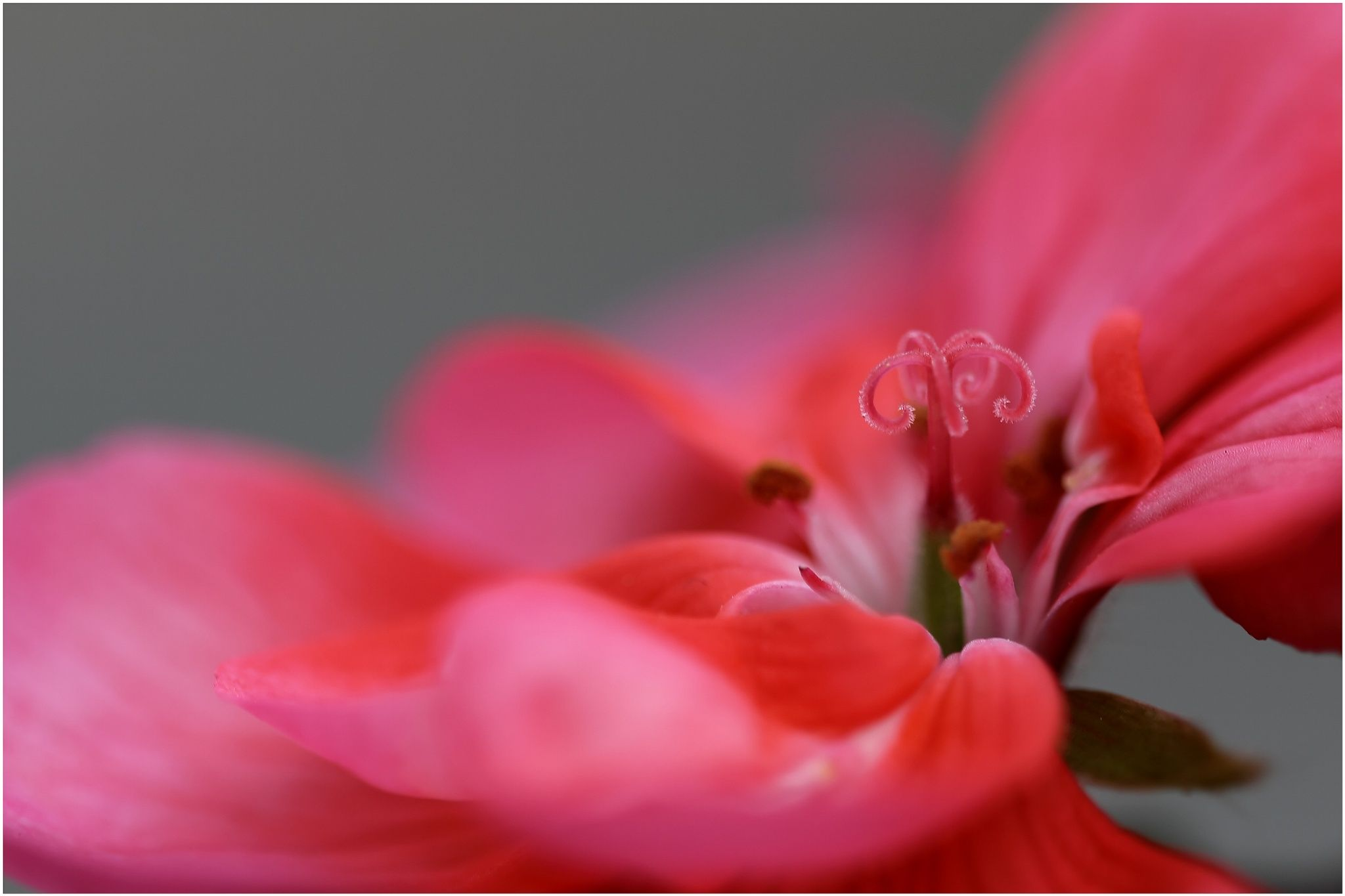 Flower Color Fineart by Christian Nenno on 500px | Flowers ...